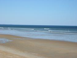 Salisbury Beach Liuards